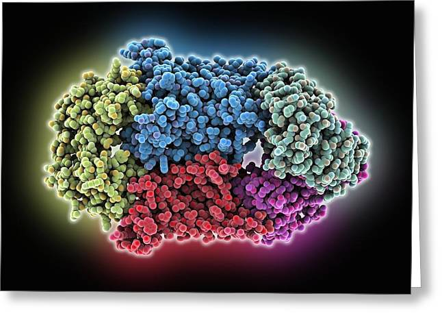 Triphosphate Greeting Cards - Vitamin B12 import proteins Greeting Card by Science Photo Library