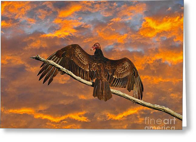 Crows Greeting Cards Greeting Cards - Vivid Vulture Greeting Card by Al Powell Photography USA