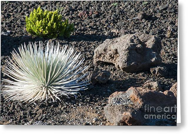 Greensward Greeting Cards - Volcanic Plant Life Greeting Card by Bob Phillips