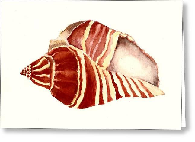 Sea Shell Art Greeting Cards - Vole Sea Shell Greeting Card by Michael Vigliotti