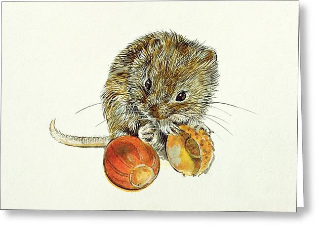Whiskers Greeting Cards - Vole With An Acorn Greeting Card by Diane Matthes