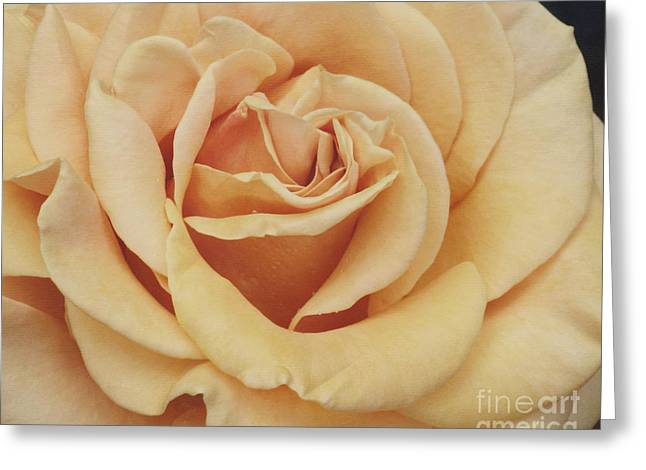 Apricot Greeting Cards - Voluptuous Greeting Card by Irina Wardas