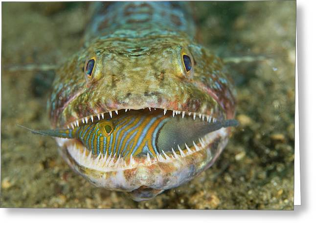 Voracious Lizardfish Predator Greeting Card by Jaynes Gallery