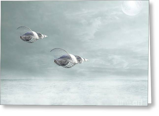 Seashell Art Greeting Cards - Voyage Greeting Card by Photodream Art