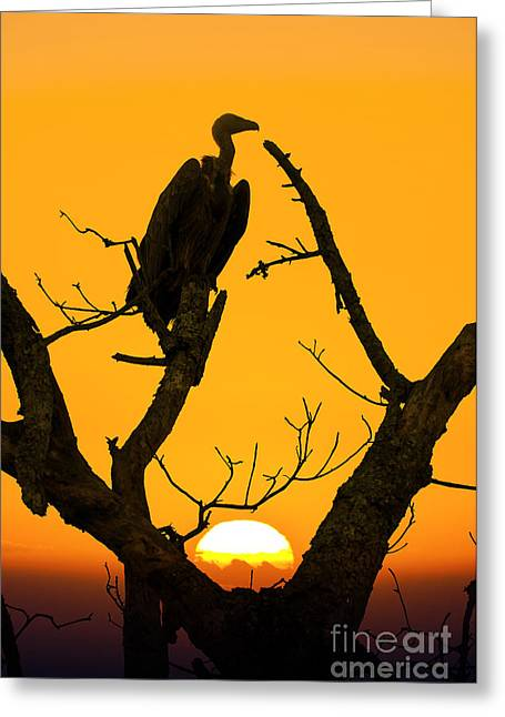 Vulture Silhouettes Greeting Cards - Vulture Greeting Card by Delphimages Photo Creations