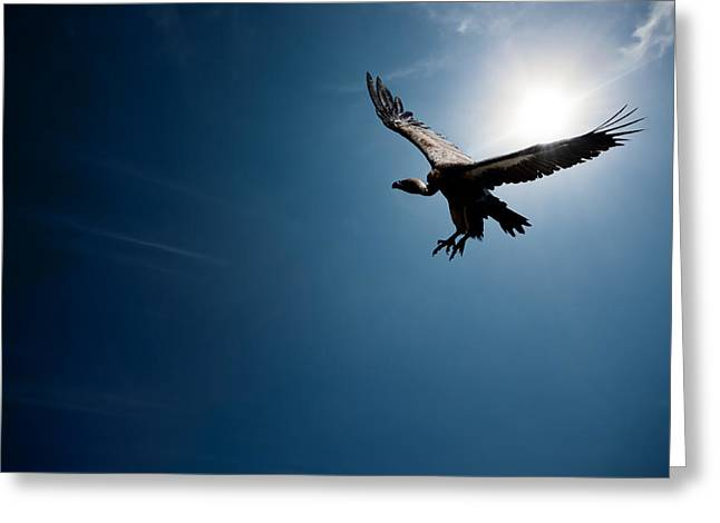 Large Birds Greeting Cards - Vulture flying in front of the sun Greeting Card by Johan Swanepoel