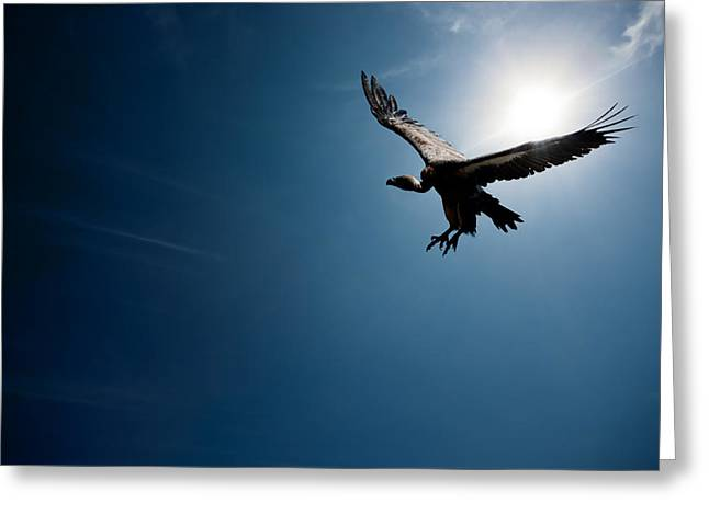 Spreads Greeting Cards - Vulture flying in front of the sun Greeting Card by Johan Swanepoel