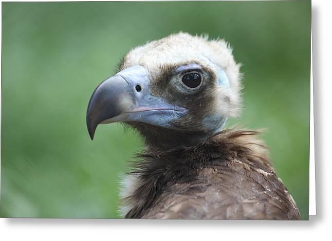 Alex Sukonkin Greeting Cards - Vulture portrait Greeting Card by Alex Sukonkin