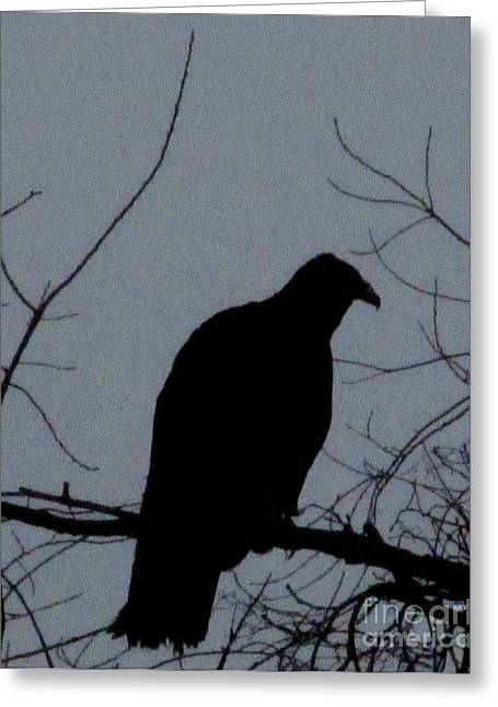 Vulture Silhouettes Greeting Cards - Vulture Silhouette Greeting Card by Joshua Bales