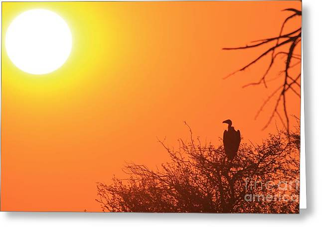 Vulture Silhouettes Greeting Cards - Vulture Sunset Silhouette Greeting Card by Hermanus A Alberts