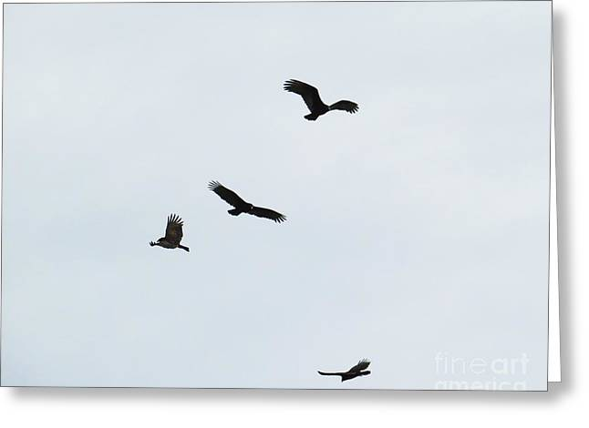 Wingtips Greeting Cards - Vulture Wings Greeting Card by Scott Cameron