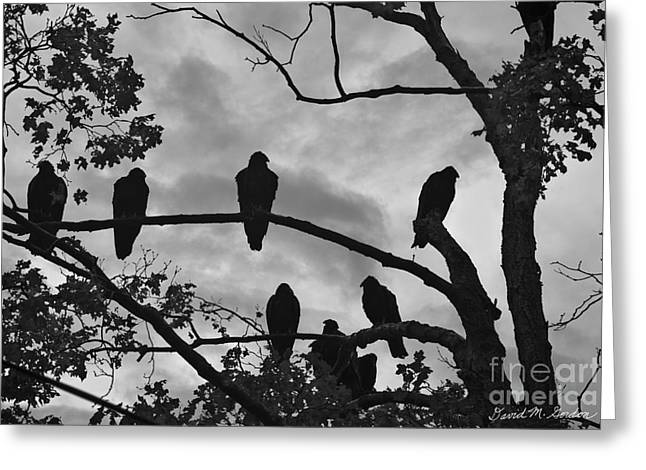 Roost Photographs Greeting Cards - Vultures And Cloudy Sky BW Greeting Card by David Gordon