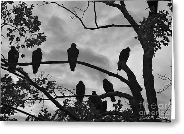 Vulture Silhouettes Greeting Cards - Vultures And Cloudy Sky BW Greeting Card by Dave Gordon