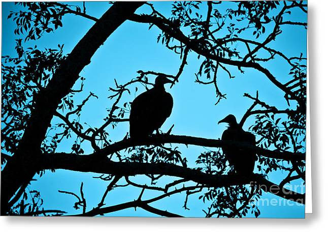 Vulture Greeting Cards - Vultures Greeting Card by Delphimages Photo Creations