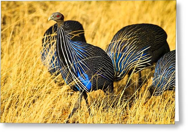 Reserve Pyrography Greeting Cards - Vulturin Guineafowl Greeting Card by Kongsak Sumano