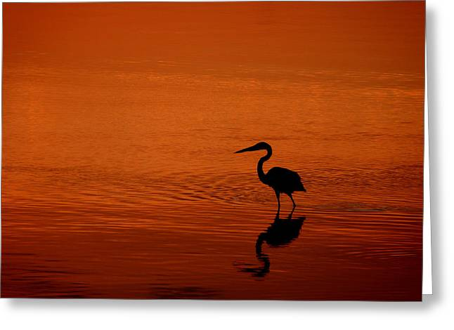 Family Of Doctors Greeting Cards - Wading On Golden Bay Greeting Card by Susan Duda