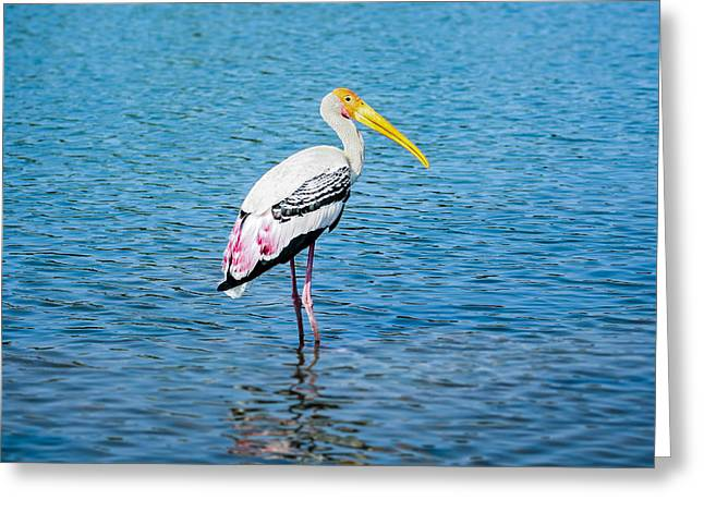 Asian Greeting Cards - Wading Stork Greeting Card by Nila Newsom