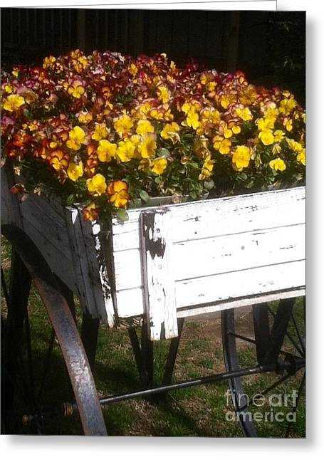 Splashy Greeting Cards - Wagonful of Happy Pansies Greeting Card by Barbara Chase