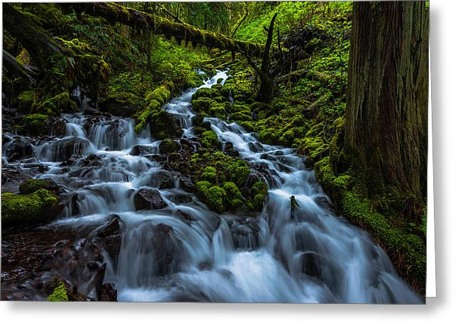 Moss Green Greeting Cards - Wahkeena Greeting Card by Chad Dutson