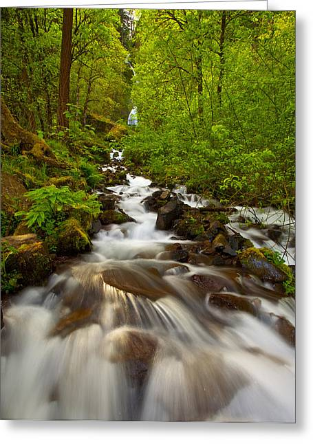 Lush Greeting Cards - Wahkeena Falls Greeting Card by Darren  White