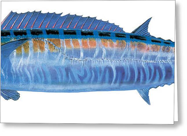 Bass Pro Shops Greeting Cards - Wahoo Greeting Card by Carey Chen
