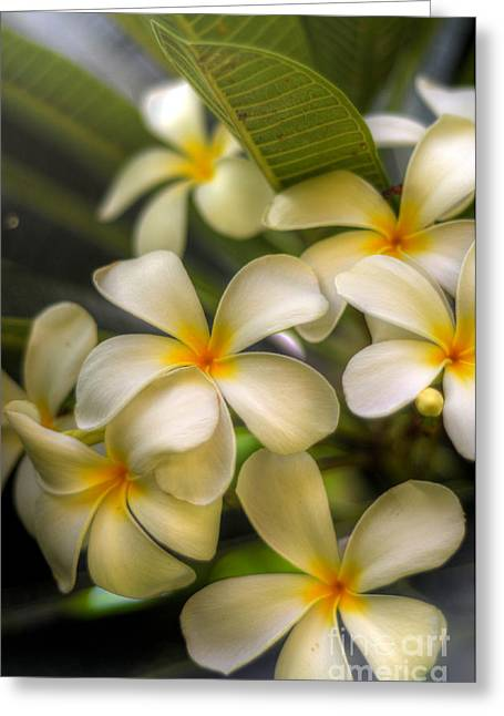 Tropical Photographs Greeting Cards - Waileas Plumerias Greeting Card by Kelly Wade