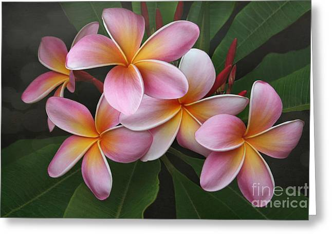 Plumeria Greeting Cards - Wailua Sweet Love Greeting Card by Sharon Mau