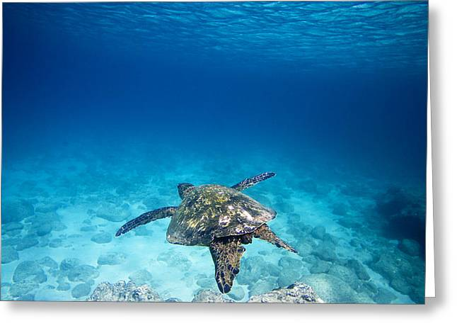 Ocean Mammals Greeting Cards - Waimea Turtle 11 Greeting Card by Sean Davey