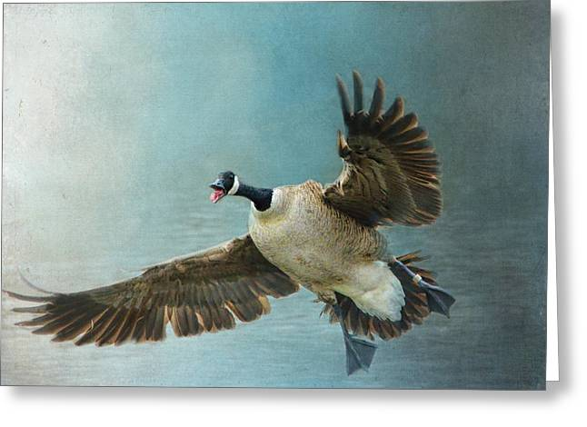 Geese Photographs Greeting Cards - Wait For Me - Wildlife - Goose in Flight Greeting Card by Jai Johnson