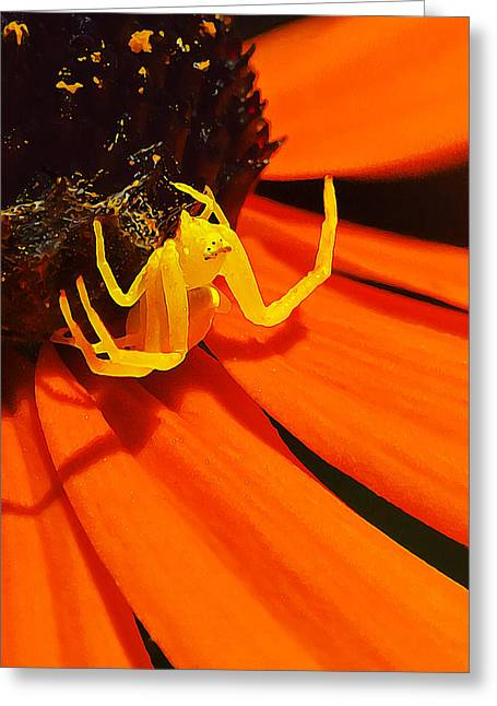 Spider Flower Greeting Cards - Waiting... Greeting Card by Bill Caldwell -        ABeautifulSky Photography