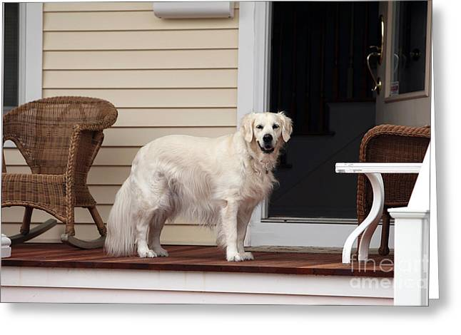 Yellow Dog Greeting Cards - Waiting by the Door for You Greeting Card by John Rizzuto