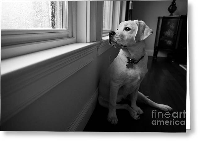 Dog Photographs Greeting Cards - Waiting Greeting Card by Diane Diederich