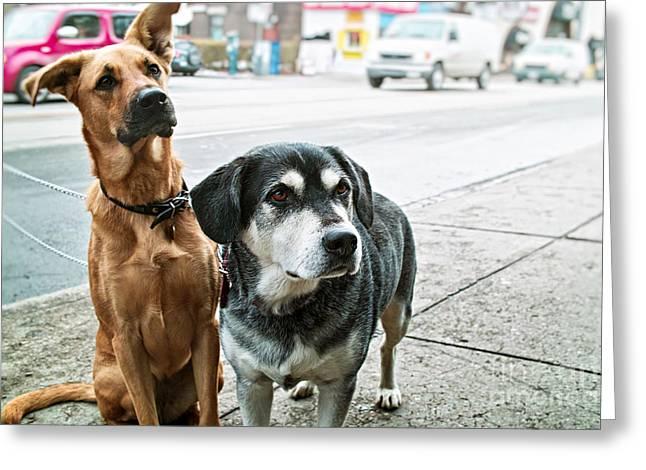 Doggies Greeting Cards - Waiting Greeting Card by Elena Elisseeva