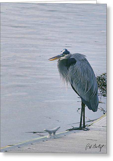 Ardea Herodias Greeting Cards - Waiting for a Boat Ride Greeting Card by Phill  Doherty