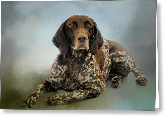 Dog Photographs Greeting Cards - Waiting For A Cue - German Shorthaired Pointer Greeting Card by Jai Johnson