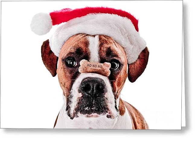 Dog Tired Greeting Card Greeting Cards - Waiting for Christmas Greeting Card by Jt PhotoDesign