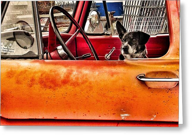Recently Sold -  - Guard Dog Greeting Cards - Waiting for Criminals Greeting Card by Patricia Greer