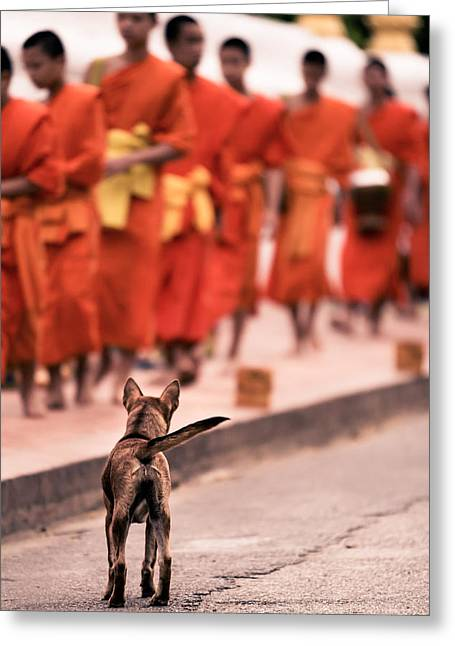 Dog Photographs Greeting Cards - Waiting for Master Greeting Card by Justin Albrecht