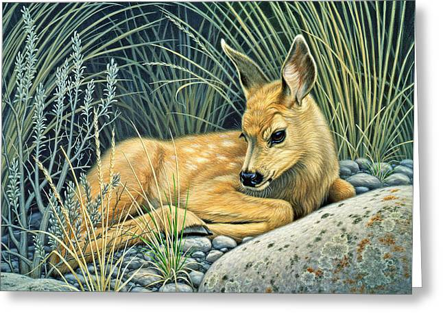 Mules Greeting Cards - Waiting for Mom-Mule deer fawn Greeting Card by Paul Krapf