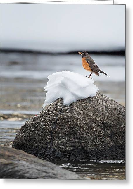 American Robin Greeting Cards - Waiting For Spring Greeting Card by Bill  Wakeley