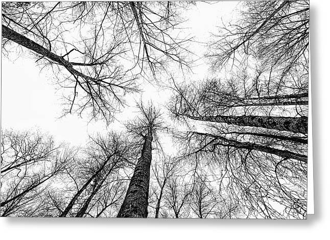 Commercial Photography Pyrography Greeting Cards - Waiting for Spring Greeting Card by Jack Vainer