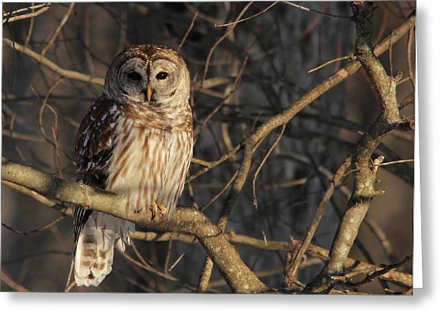 Predator Greeting Cards - Waiting for Supper Greeting Card by Lori Deiter