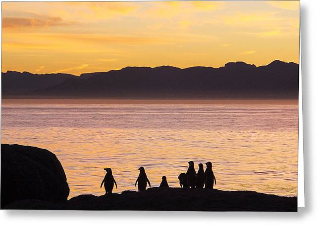 Simons Town Greeting Cards - Waiting For The Dawn Greeting Card by Catherine Withers-Clarke