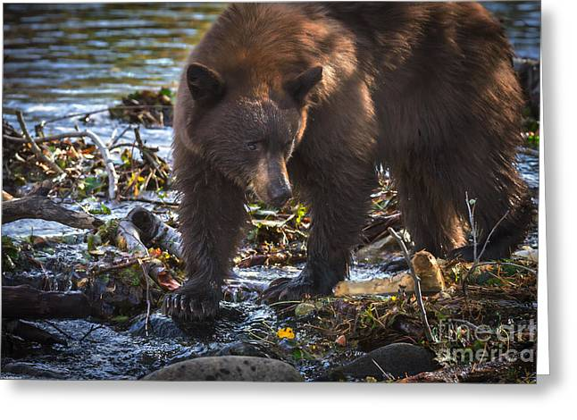 Beaver By Water Greeting Cards - Waiting For The Fish To Come Greeting Card by Mitch Shindelbower