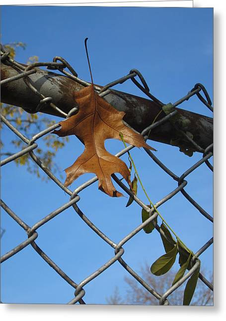 Photos Of Autumn Greeting Cards - Waiting For the Next Gust of Wind Greeting Card by Guy Ricketts