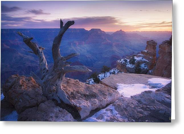 Yaki Greeting Cards - Waiting for the Sun Greeting Card by Peter Coskun