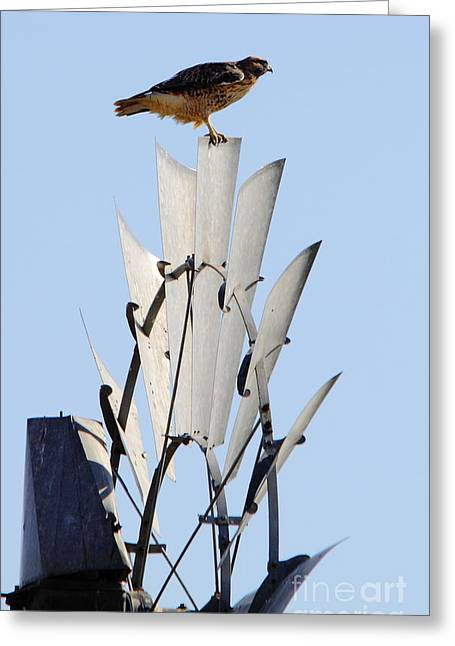 Aermotor Greeting Cards - Waiting For The Wind Greeting Card by Robert Frederick