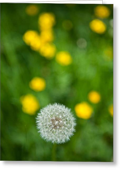 Dandilion Greeting Cards - Waiting for Wind - Blue Ridge Parkway Greeting Card by Dan Carmichael