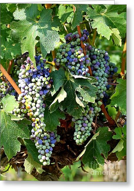 Fruit On The Vine Greeting Cards - Waiting for Wine Greeting Card by Carol Groenen