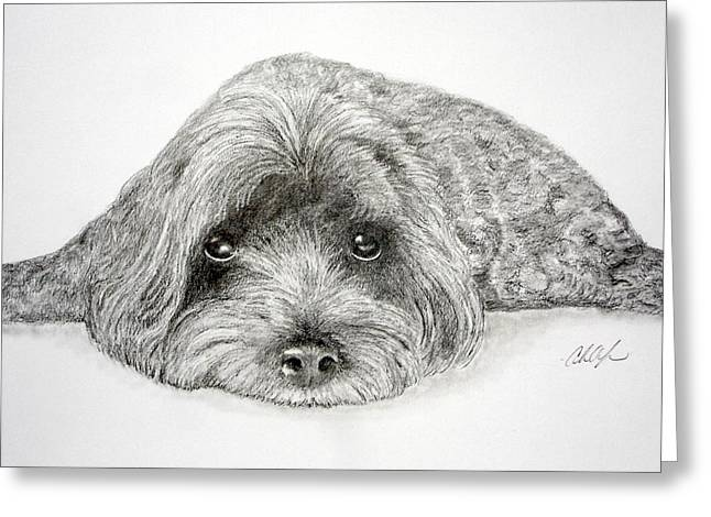 Maltese Drawings Greeting Cards - Waiting for You Greeting Card by Chris Fraser